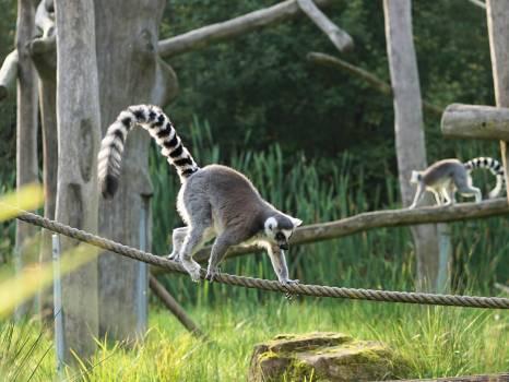 primate #416168