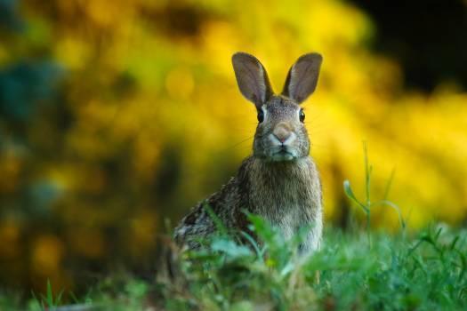 Hare Mammal Rabbit #416266