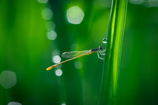 Close up damselfly grass hd wallpaper Free Photo
