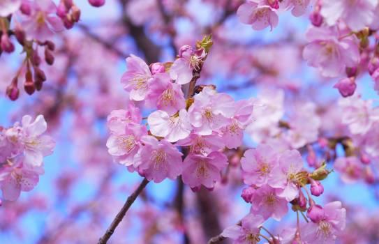 flower #416277