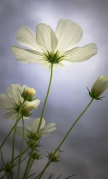 Herb Vascular plant Plant #416295