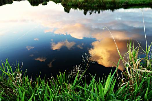 Reflection of White Clouds on Pond Free Photo