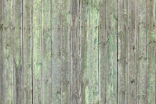 Pine Tree Wood #416381