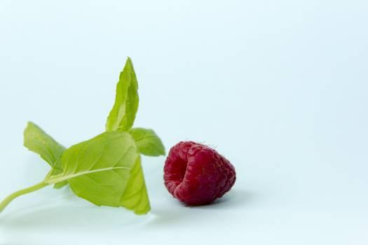 berry #416411