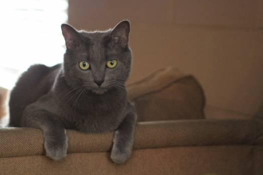 Kitty Cat Feline #416416