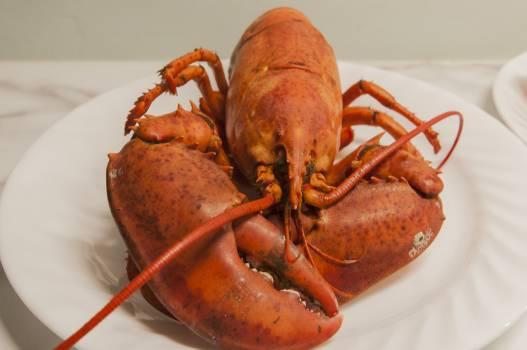 lobster #416421