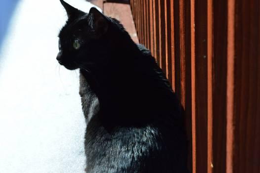 kitty #416422