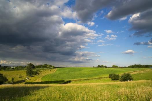 grassland #416561