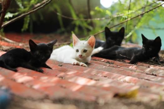 Kitten Young mammal Animal #416562