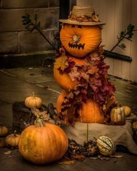 pumpkin #416626