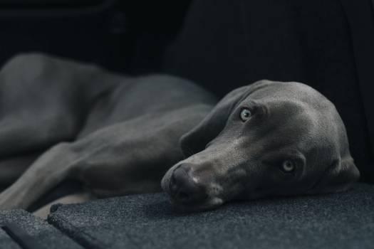Dog pet animal #41665