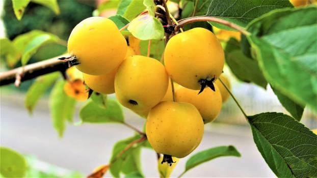 fruit #416752