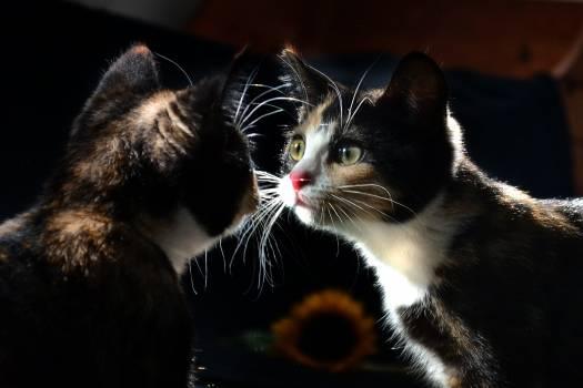kitty #416798