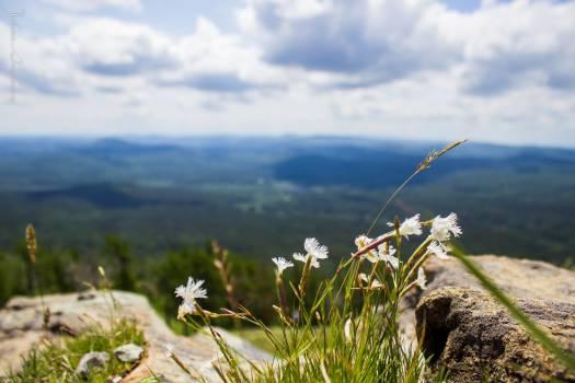 Sky Field Grass #416800