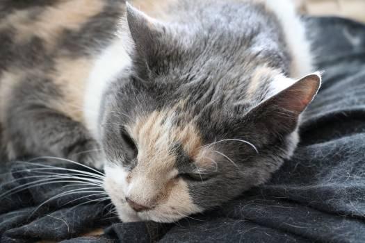 Kitty Cat Feline #416816