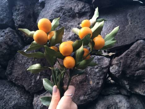 citrus #416830
