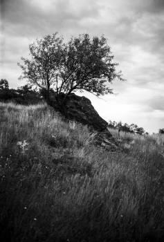 Tree Landscape Sky #416846