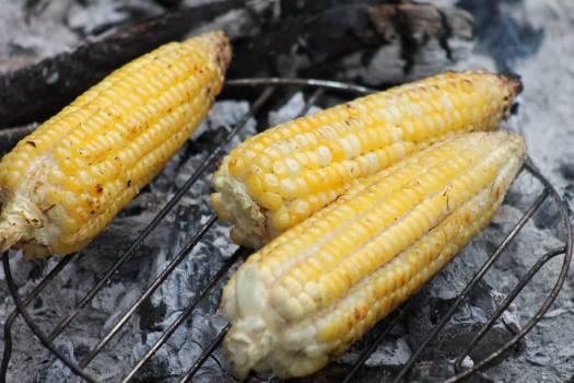 Corn Kernel Grain #416855