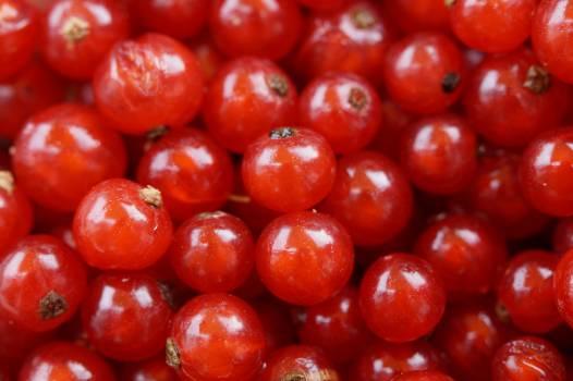 tomato #416865