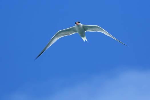 Albatross Seabird Bird #416906