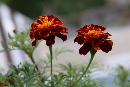 flower #416944