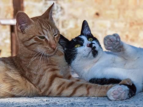 Kitty Cat Feline #416985