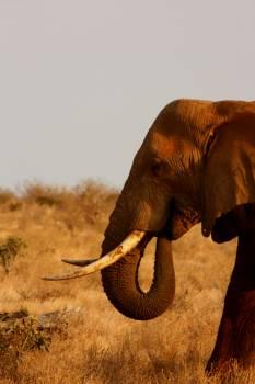 Elephant #417037