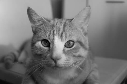 feline #417038