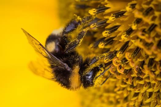 sunflower #417045