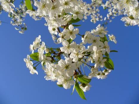 flower #417065