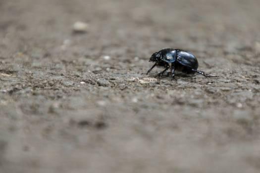 beetle #417077