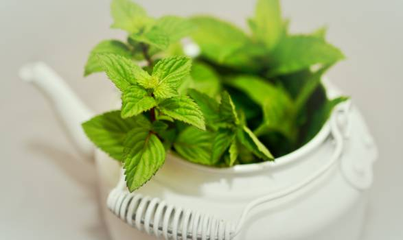 Herb Basil Tea #417089