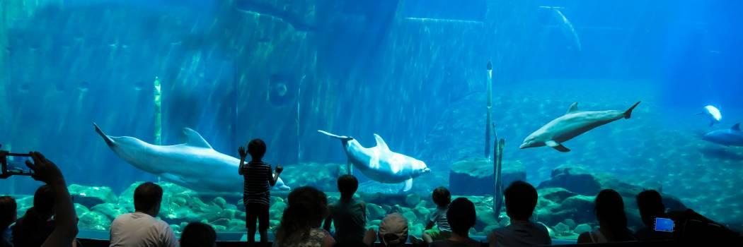 Aquarium Fish Ray #417103