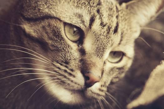 Domestic cat Cat Domestic animal #417120