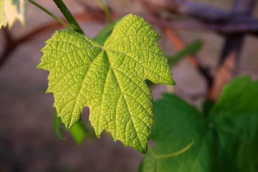Herb Plant Vascular plant #417138