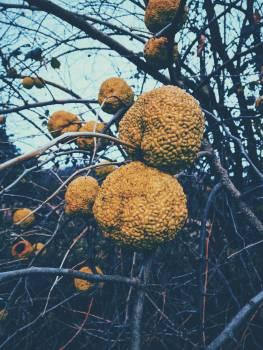 Plant Cactus Flower #417179