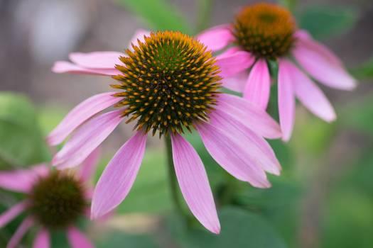 Flower Plant Daisy #417234