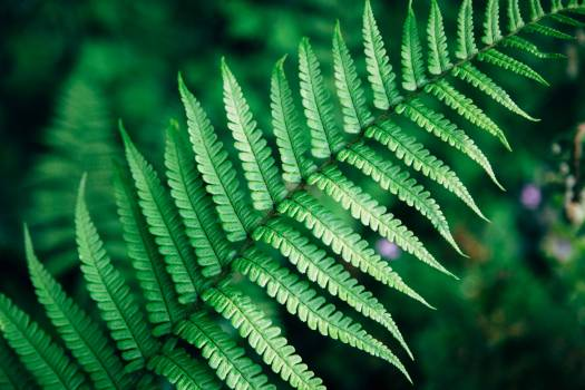 Fern Plant Leaf #417275