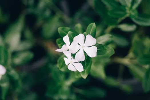 Flower Plant Blossom #417301