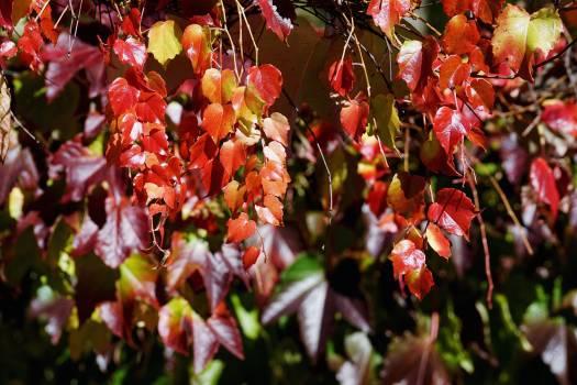 shrub Free Photo