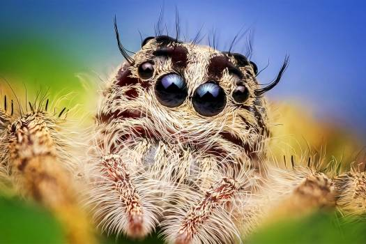 spider #417313