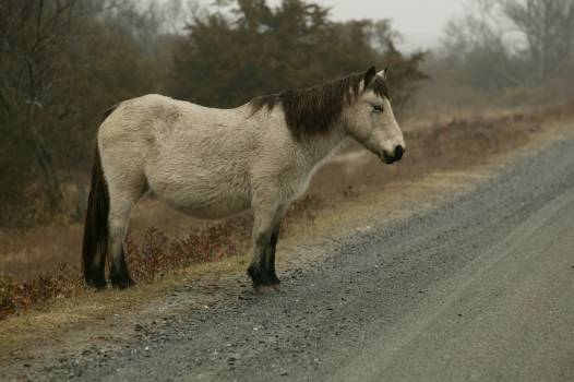 equine #417370