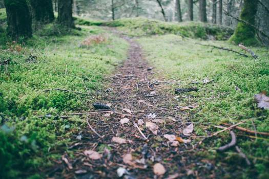 Grass Landscape Forest #417378