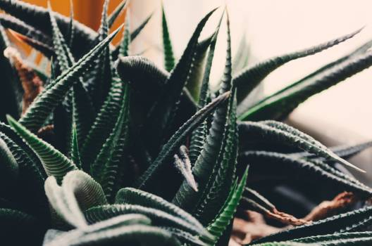 Plant Texture Design #417434