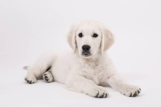 Dog Pet Canine #417502