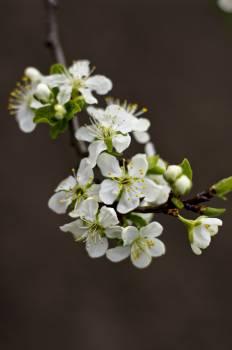 Flower Plant Blossom #417552
