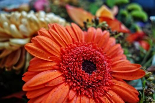 petal #417564