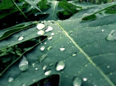Drop Leaf Rain #417603