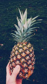 Produce Pineapple Fruit #417624