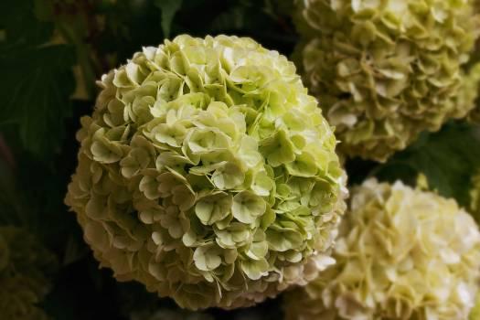 cabbage #417625